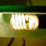 Le lampadine a risparmio energetico (foto M. Cuomo - www.nonsolorisparmio.it)