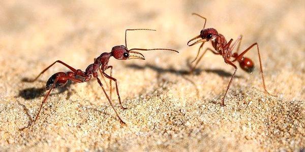 Formiche: come allontanarle?