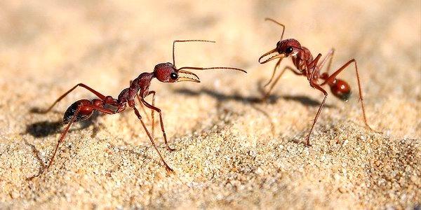 Formiche - come allontanarle