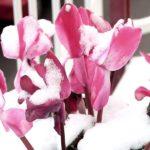 Come proteggere le piante dal freddo (foto M. Cuomo)
